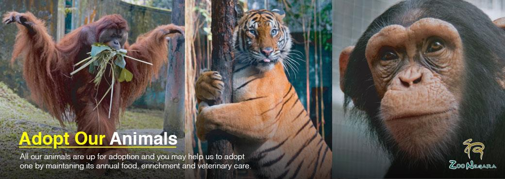 Zoo Negara Adoption Package